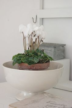 I am loving plants in terrines and bowls