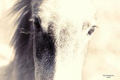 Photo by JAS Studios, Salt River wild horses - greeting cards available now on Fine Art America!
