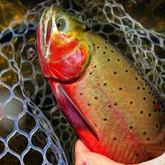 How to Get Started With Freshwater Fishing: Tips and advice to help you get started with your fresh water fishng journey. Trout Fishing Tips, Fishing Knots, Fishing Reels, Fishing Lures, Sport Fishing, Best Fishing, Going Fishing, Fishing For Beginners, Fishing Outfits