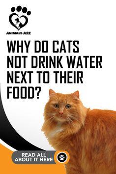 All the best cat facts answered 🐱 See them all here 🐱 Or get all your cat questions answered on Animals ✔ Check our site now! Cat Drinking, Drinking Water, Pet Care Tips, Pet Tips, Dog Care, Cat Info, What Cat, Survival Instinct, Cat Enclosure