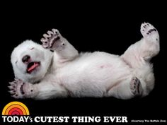 Cutest thing ever: Polar bear cub smiles for the camera