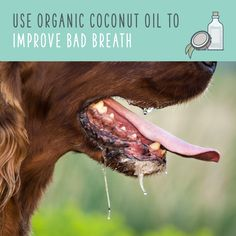 Why not use a natural disinfectant to brush your pup's chompers? That way, when they swallow it — which they will — you know they only have good ingredients in their belly. You can brush with coconut oil alone, or use this homemade mixture!
