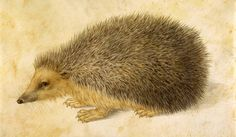 """Hans Hoffman's meticulous gouache of a hedgehog are examples of the bewildering styles and subjects in """"Dürer and Beyond."""""""