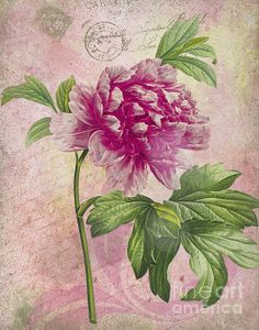 Pretty in Pink - Vintage Peony Greeting Card by Traci Vanover