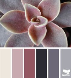 succulent hues from Design Seeds