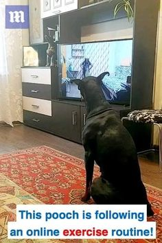 Cute Funny Dogs, Cute Funny Animals, Cute Baby Animals, Animals And Pets, Cute Cats, Cute Animal Photos, Cute Animal Videos, Funny Animal Pictures, Animal Pics