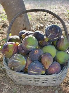 A beautiful mind Exotic Fruit, Tropical Fruits, Fresh Figs, Fresh Fruit, Fruit And Veg, Fruits And Vegetables, Fruit Photography, Weird Food, Fig Tree