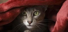 Cat Teleports Across the Room -- Or So It Seems | Catster