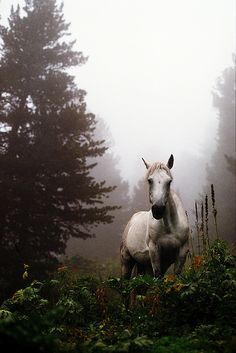 """""""We will never have to tell our horse that we are sad, happy, confident, angry or relaxed. He already knows long before we do."""" ~Marjike do Jong"""