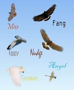 pictures of funny maximum ride with captions | Some bird I drew...