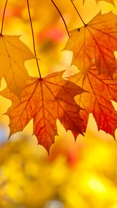 Fall Leaves Iphone Background | Wallpapers Gallery