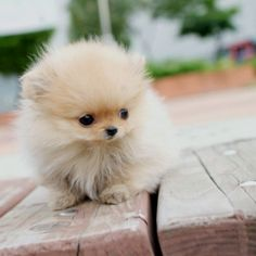 It looks so small & fluffy!!!!!!