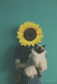 Flowerheads by RavenHaylin  #Flowerheads #Flowers #Colorful #Vintage  #Photography #Surreal #Conceptual #Redbubble #Sunflower
