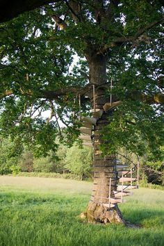 Wendeltreppe für Ihren Hinterhof-Baum #hinterhof #ihren #wendeltreppe
