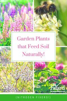 Garden Plants that Feed Soil Naturally - Fafard Nitrogen Fixing Plants, Garden Soil, Garden Plants, Sustainable Gardening, Different Plants, Cool Plants, Fertility, Black Gold