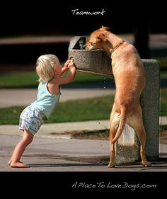 It takes two. Wet dog #water #wet #dog lol haha silly crazy pet puppy pup animal love water fountain baby