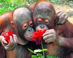 all forms of love    National Geographic - Inspiring People to Care About the Planet