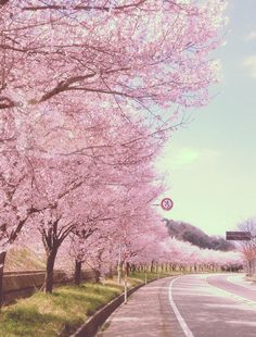Photography landscape spring scenery Ideas for 2019 Beautiful Streets, Beautiful World, Beautiful Places, Beautiful Pictures, Dark Photography, Landscape Photography, Spring Scenery, Sakura Cherry Blossom, Cherry Blossoms