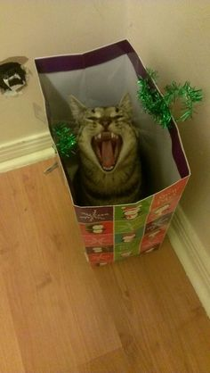 """I LOVE THIS FREAKIN' CHRISTMAS BAG! TANK YOU SANTA!!!"""