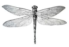 vintage dragonfly - Google Search
