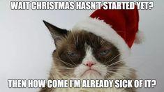 Grumpy Cat Humor, Funny Cat Memes, Funny Cats, Grumpy Cat Christmas, Holiday Meme, Christmas Holidays, Sick, Crochet Hats, Animals