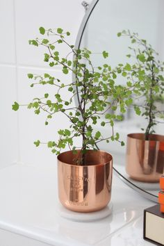 Copper Tom Dixon candle turned into a plantpot with a lovely litte fern in it.