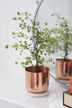 Copper Tom Dixon plantpot with a lovely litte fern in it.