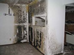 38 best mold images mold exposure toxic mold symptoms black mold rh pinterest com