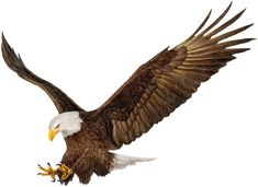 Illustration about Bald Eagle hand draw on white background vector illustration. Illustration of illustration, vector, draw - 66975456 Eagle Background, Brush Background, Best Photo Background, Studio Background Images, Eagle Drawing, Eagle Vector, Eagle Pictures, Esoteric Art, Cute Boy Photo