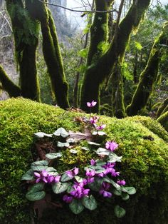 trees, moss, and flowers