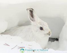 Wildlife Nature, Rocky Mountain National Park, Rocky Mountains, Nature Photography, National Parks, Animals, Animais, Animales, Animaux