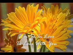 Dana Winner - In Love With You (Subtitled) - YouTube