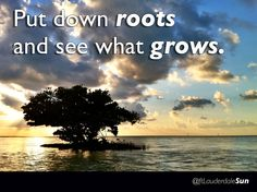 'Put down roots and see what grows' #ftlauderdalesun