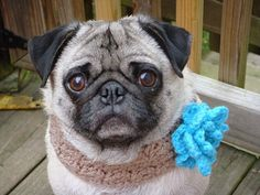 Hey, I found this really awesome Etsy listing at https://www.etsy.com/listing/84412828/bloomin-beauty-neck-warmer-for-dogs-made