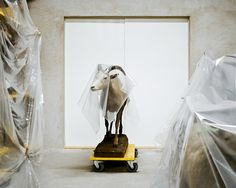 taxidermy behind the scenes by Klaus Pichler