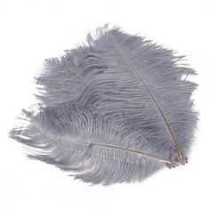 10 Pcs. Gray/Silver Peacock Feathers - bid starts at $4 in the Ultimate Supplies Auction, happening at 5p.m. at Tophatter.com!