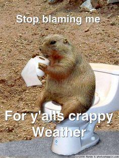 Do Groundhogs Eat Cat Food