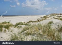 Dunes And Sea In The Netherlands Stockfoto 124056883 : Shutterstock