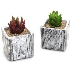 Amazon.com: 3 Inch Textured Cement Square Box Succulent Plant Pots / Natural Stone Design Cactus Planters - Set of 2: Patio, Lawn & Garden
