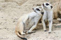 Cincinnati Zoo, Clydesdale, Animal Kingdom, Mammals, Kangaroo, Cute Animals, Creatures, Photo And Video, Birds