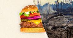 Die Fastfood-Kette Burger King gibt sich öffentlich als umweltbewusstes Unternehmen. Der nachhaltige Umgang mit Ressourcen stehe an erster Stelle, man sei sich der Verantwortung bewusst – insbesond…