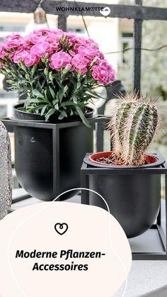 Wohnaccessoires, wie stylishe Blumentöpfe oder dekorative Vasen verleihen Deiner Einrichtung einen ganz persönlichen Stil. Wir zeigen Dir die schönsten Pflanzen-Accessoires und haben ein paar Ideen für Dich, wie Du damit Dein Zuhause gestalten kannst. Gardening, Modern, Planter Pots, Decorative Vases, Small Trees, Personal Style, Planting, Succulents, Indoor House Plants