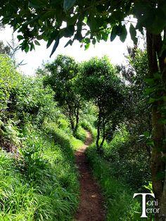 Camino entre la hierba
