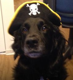 @Betsy McDonald @PAWS Chicago Happy Halloween from Pirate Gabe! pic.twitter.com/NyFhOpr4g5