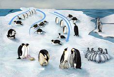 Dzień Wiedzy o Pingwinach – pakiet edukacyjny