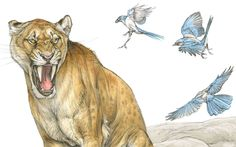 Once and future cats: Sabercats were magnificent, powerful predators – what does their extinction tell us about the future of life on earth? Terryl Whitlatch, Extinct Animals, Creature Design, Science And Nature, Predator, Geology, Cat Art, Wildlife, Creatures