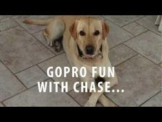 Dog's POV Of Swimming #cute #dog