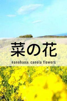 One Kanji a Day菜の花nanohana; canola flowers
