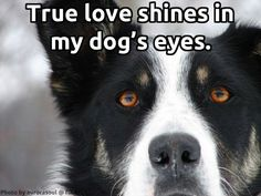 The Dining Dog & Friends Dog Lover Quotes, Dog Lovers, Dog Friends, Best Friends, Beatles Songs, Dog Eyes, Timeline Photos, Mans Best Friend, Country Life