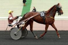 meilleures cotes pour ce lundi 07.12.2015 de vincennes avec 15 chevaux